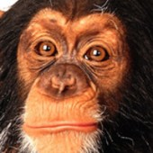 Opica ačlovek