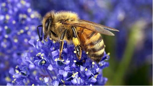 Príklad včely